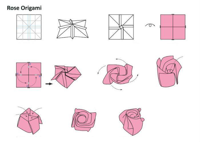 Роза Кавасаки - схема