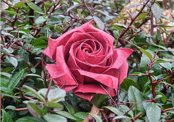 Оригами-роза на 14 февраля